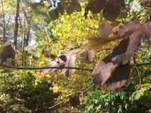 Las, pal jesieni brown liście, zakończenie Zdjęcie Stock