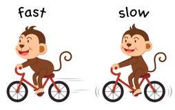 Las palabras opuestas ayunan y vector lento ilustración del vector