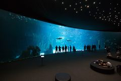 Las Palmas de Gran Canaria Spanien - December 28 2018: Besökare tycker om härlig sikt av marin- liv i den största behållaren i Eu royaltyfri bild