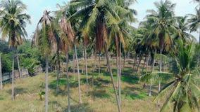 Las palmas de la forma interesante con las hojas hinchadas crecen en jardín almacen de metraje de vídeo