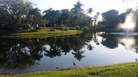 Las palmas en el lago foto de archivo libre de regalías