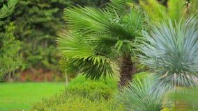 Las palmas en el parque en un fuerte viento almacen de metraje de vídeo