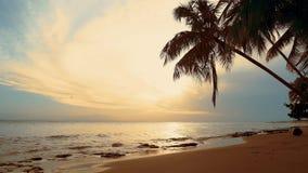 Las palmas naturales varan ocaso Las ondas en la orilla reflejan el mar y el cielo del ocaso Igualando la orilla de mar en las pa almacen de video