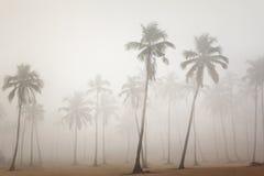 Las palmas por mañana se empañan en Arambol, Goa, la India foto de archivo libre de regalías