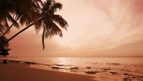 Las palmas varan paisaje Mar del ocaso reflejado en las ondas Ocaso de la naturaleza del verano almacen de metraje de vídeo