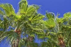 Las palmas verdes en un cielo azul en la playa parquean Antalya, Turquía foto de archivo