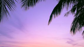 Las palmas y el cielo de la puesta del sol, puesta del sol tropical con las cigarras suenan, 3 tiros almacen de metraje de vídeo