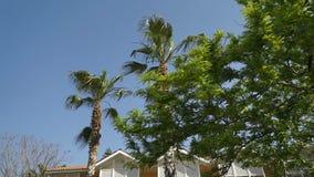 Las palmeras altas crecen en el fondo del edificio amarillo Panorama de la parte inferior a rematar almacen de video