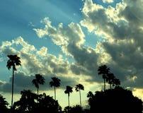 Las palmeras de la silueta en una noche nublada como el sol fijan Foto de archivo