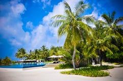 Las palmeras de Maldivas acercan a la playa Imágenes de archivo libres de regalías