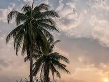 Las palmeras del coco se van en la puesta del sol con el fondo del cielo Imagen de archivo libre de regalías