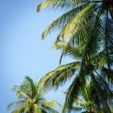 Las palmeras del coco y el cielo azul en el hin de hua varan Tailandia foto de archivo libre de regalías