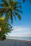 Las palmeras en el paraíso les gusta la playa de la arena en Tailandia Fotografía de archivo