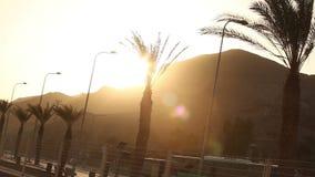Las palmeras a lo largo del camino en la puesta del sol, palmeras en un fondo de montañas, el sol fijan sobre la montaña en a almacen de metraje de vídeo