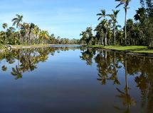 Las palmeras reflejan en el lago de centro en los jardines tropicales de Fairchildl en Miami fotografía de archivo