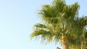Las palmeras se están moviendo en el viento almacen de video