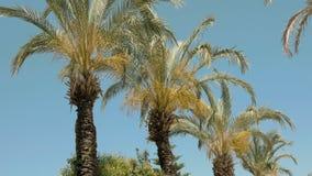 Las palmeras se están moviendo en el viento almacen de metraje de vídeo