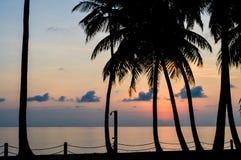 Las palmeras siluetean en la puesta del sol Foto de archivo libre de regalías