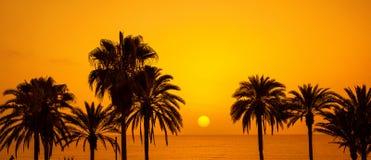 Las palmeras siluetean en la puesta del sol Imagenes de archivo