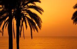 Las palmeras siluetean en la puesta del sol Fotos de archivo