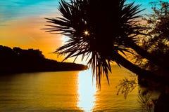 Las palmeras siluetean en la puesta del sol beach Foto de archivo libre de regalías