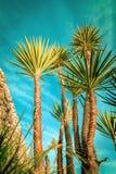 Las palmeras siluetean en la puesta del sol beach Imágenes de archivo libres de regalías