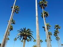Las palmeras tropicales acercan a la formación de California de la playa Fotos de archivo
