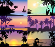 Las palmeras tropicales de la naturaleza de las vacaciones de la puesta del sol de la noche del verano siluetean el paisaje de la Fotografía de archivo