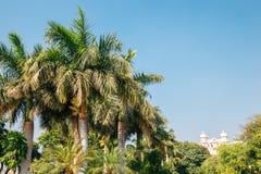 Las palmeras tropicales parquean cerca del lago Pichola en Udaipur, la India fotografía de archivo