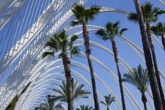 Las palmeras y el cielo en el Umbracle en Valencia fotos de archivo