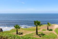 Las palmeras y el jardín por el océano costean con el cielo azul imagenes de archivo