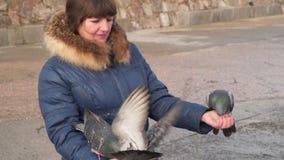 Las palomas comen el pan de las manos de una mujer metrajes