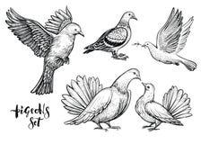 Las palomas dan el ejemplo exhausto ilustración del vector