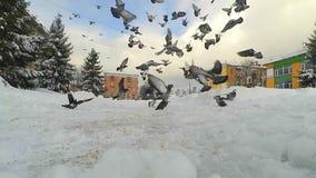 Las palomas de los pájaros vuelan del tejado al cuadrado en la ciudad almacen de video