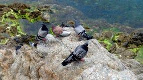 Las palomas en la piedra Foto de archivo libre de regalías