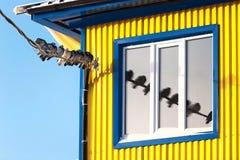 Las palomas en un alambre se reflejan en ventana Imagen de archivo