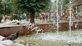 Las palomas juegan sobre la fuente en parque almacen de metraje de vídeo