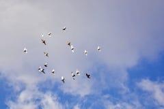 Las palomas que vuelan, cielo azul, blanco se nublan p4 Fotos de archivo