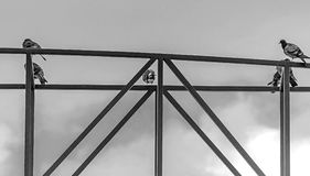 Las palomas se sientan en la construcción metálica Foto de archivo