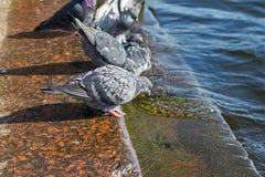 Las palomas se sientan en las escaleras Imágenes de archivo libres de regalías