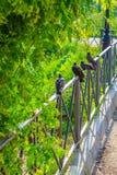 Las palomas se sientan en una línea en el parque Fotos de archivo libres de regalías