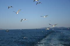 Las palomas vuelan en cielo sobre el mar en Estambul Imágenes de archivo libres de regalías
