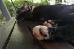 Las patas del gato dormían Fotografía de archivo