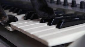 las patas del gato negro que juegan las llaves almacen de video