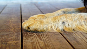 Las patas del perro grande imagen de archivo
