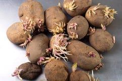 Las patatas Imagen de archivo