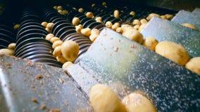 Las patatas crudas se están moviendo a lo largo del conducto del transportador almacen de metraje de vídeo