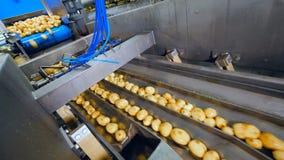 Las patatas están cayendo en los conductos del transportador metrajes