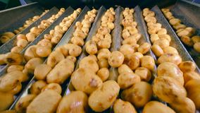 Las patatas shakingly se están moviendo a lo largo de los conductos del metal almacen de video