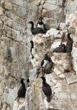 Las pelusas de la roca que jerarquizan en las repisas de acantilados escarpados imagenes de archivo